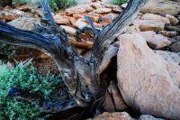 arid-region-trees_DSC_3464