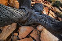 arid-region-trees_DSC_3491