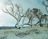 kosciuszko_snow_02