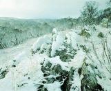 kosciuszko_snow_05