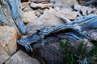 arid-region-trees_DSC_3465
